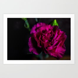Floral Untitled .04 Art Print