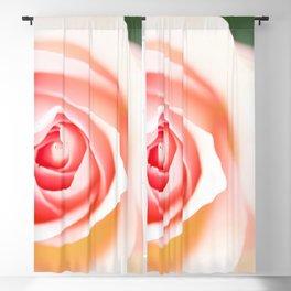 Beautiful Rose in Close up #decor #society6 #buyart Blackout Curtain