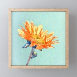 Sunflower Daze Framed Mini Art Print