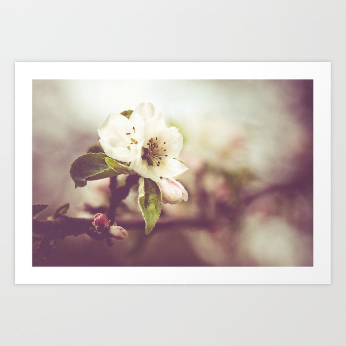 Lonely blossom Art Print