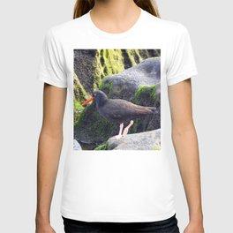 Black Oystercatcher T-shirt