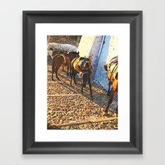 Donkeys Santorini 2 Framed Art Print