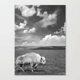 Great White Buffalo Canvas Print