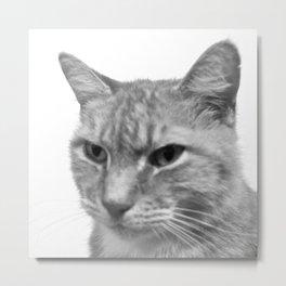 Levi the Cat - B&W Metal Print