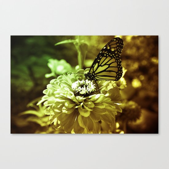 Butterfly on Flower - Color Canvas Print