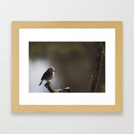 Birds from Pantanal chibum Framed Art Print