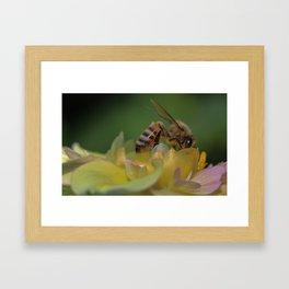 bee in flower Framed Art Print