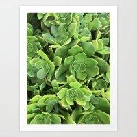 Succulents #2 Art Print