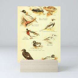 William Playne Pycraft - A Book of Birds (1908) - Plate 5: Ducks Mini Art Print