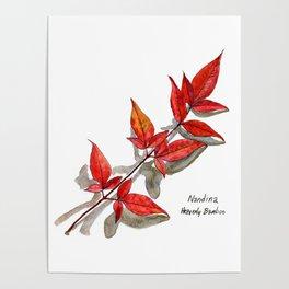 Nandina - Heavenly Bamboo Poster
