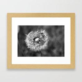 Dandelion & Autumn Framed Art Print