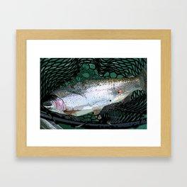 Rainbow Trout in Alaska Framed Art Print