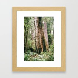 Redwood National Park Framed Art Print