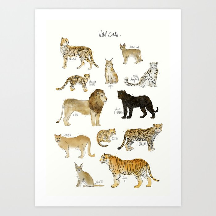 Discover the motif WILD CATS by Amy Hamilton as a print at TOPPOSTER