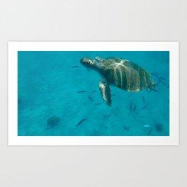 Barbados Sea Turtle Art Print