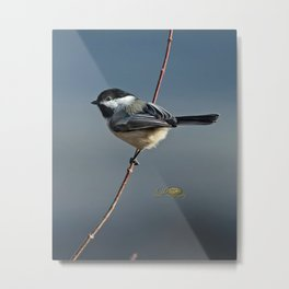 Winter Chickadee II Metal Print