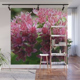 Sedum Flowers and the Ant Wall Mural