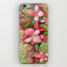 Begonia Beauty iPhone & iPod Skin