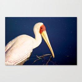 Yellow-Billed Stork Canvas Print
