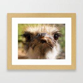 ostrich mug Framed Art Print