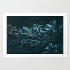 evergreen .  Art Print