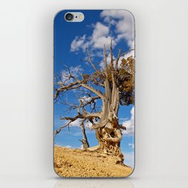 Bristlecone Pine at Bryce Canyon iPhone Skin