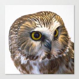Saw Whet Owl Portrait Canvas Print