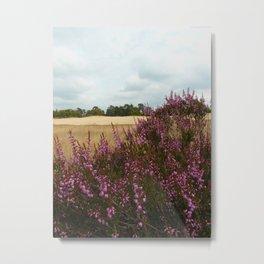 Calluna vulgaris Metal Print