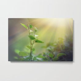 Light shining on a green sprout, sustainable energy Metal Print