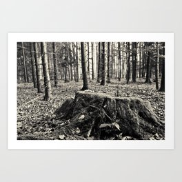 HDR daylight autumnous tree stump black and white Art Print