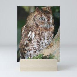 Eastern Screech Owl Mini Art Print