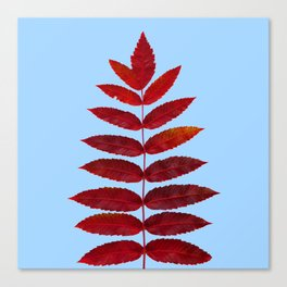 Red Sumac Leaves Canvas Print