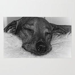 Dachshund Sleeping Peacefully on Stuffed Animal, Black and White Rug