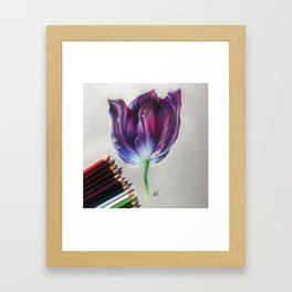 """Tulip"" Drawing Framed Art Print"