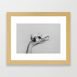 Canis Latrans III Framed Art Print