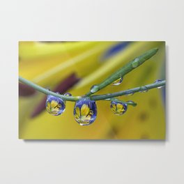 string of lilly drops Metal Print