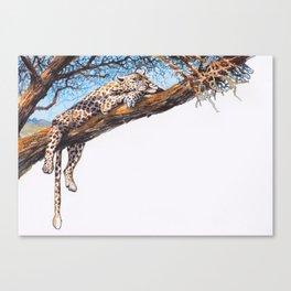 cool cheetah Canvas Print