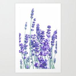 Fresh Lavender #1 #decor #art #society6 Art Print