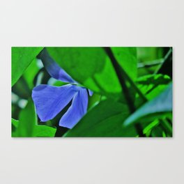 Periwinkle410 Canvas Print