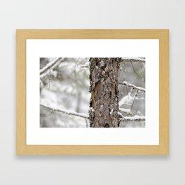 Tree Bark in the Winter Framed Art Print