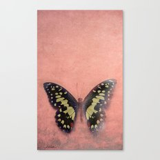 Vintage Butterfly 3 Canvas Print