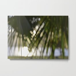 Natural Shade (Tropical Fan Palm) Metal Print