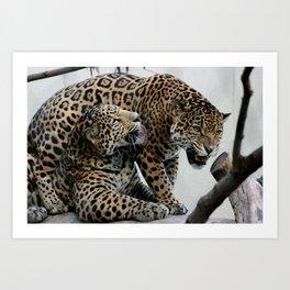 Jaguar Feud  Art Print