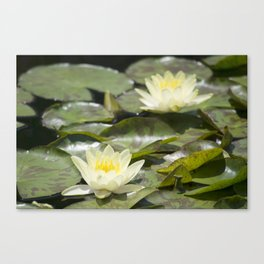 Longwood Gardens - Spring Series 303 Canvas Print