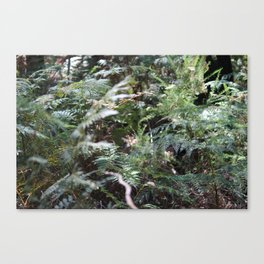 Fern 1 Canvas Print