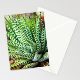 Succulent 2 Botanical / Nature Photograph Stationery Cards