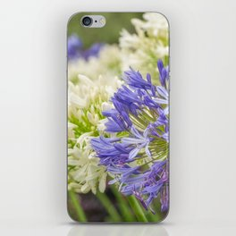 Striking Blue and White Agapanthus Flowers iPhone Skin
