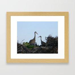 Sandhill Crane pair Framed Art Print