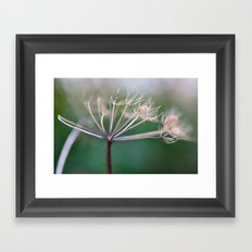 Yarrow Framed Art Print
