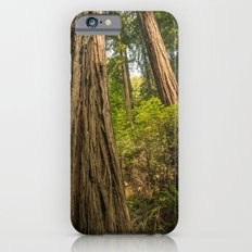 Giant Redwoods Slim Case iPhone 6s